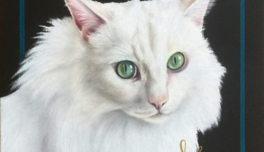 白猫・セルカークレックス・マンチカン