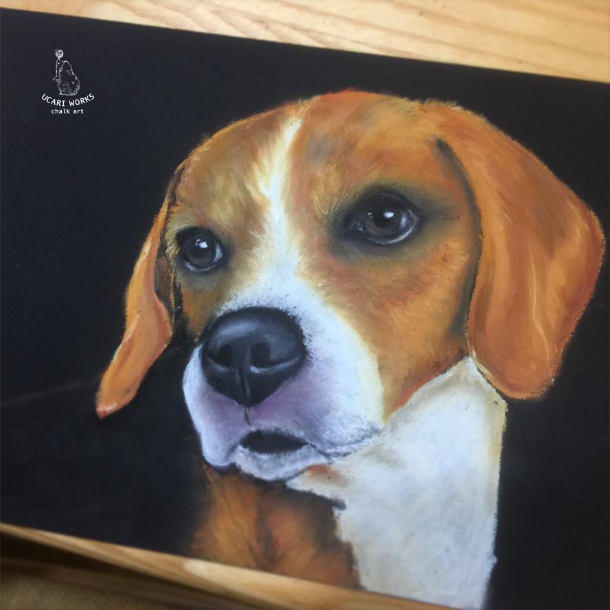犬レッスン ビーグル